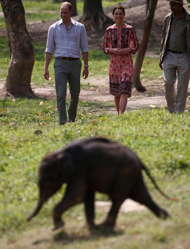 Look utilizado para visitar elefantes